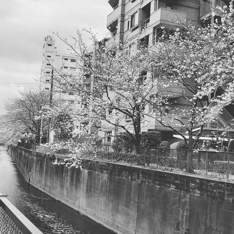 プレイス★明日22日(月)より東京都の要請により3時半~9時までとなりますm(__)m皆様なかなか訳分かりませんが何卒ご理解の程よろしくお願いいたしますm(_ _)mちなみに来週は火曜水曜休ませていただきますm(__)m